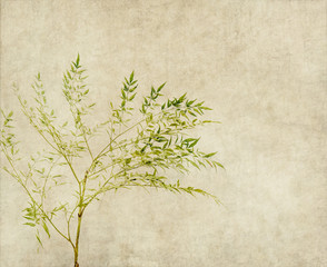 Fototapete - tree with old grunge antique paper texture