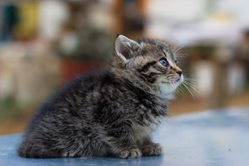 Cute newborn cat posing