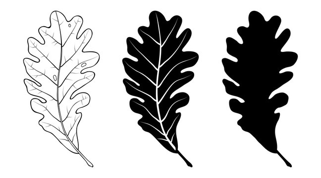 Oak leaf. Linear, silhouette isolated on white background. Vector illustration