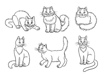 Set of 6 cats in contours - vector illustration