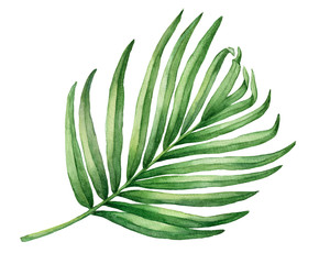 Tropical green palm leaf. Watercolor hand drawn painting illustration isolated on a white background.
