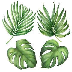 Set of exotic tropical green palm and monstera leaves. Watercolor hand drawn painting illustration isolated on a white background.
