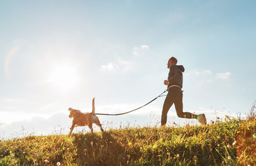 Canicross exercises. Man runs with his beagle dog at sunny morning
