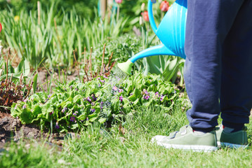 Boy is helping to water the flowers in a garden.