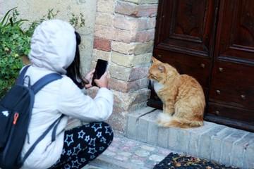 Niñas fotografiando gatos con un celular