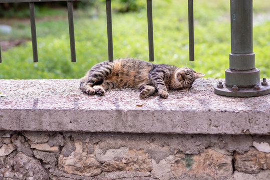 A beautiful stray tabby cat takes a nap on a stone ledge, under an iron fence, in the city of Athens, Greece, where stray cats are common.
