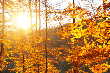 Picturesque view of beautiful forest on sunny autumn day