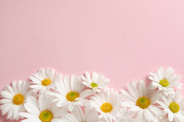 Beautiful chamomile flowers on color background, flat lay with space for text