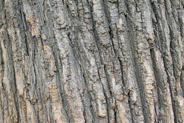 dry bark