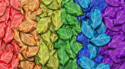 Colors of rainbow. Multicolored fallen autumn leaves texture background. Abstract pattern of bright leaves.