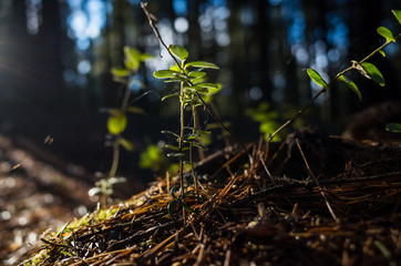 Forest vegetation, illuminated by bright sunshine, photo with high contrast