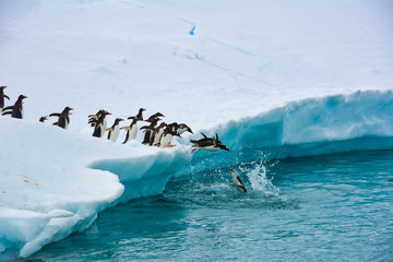 Staande foto Antarctica Penguins One After Another Funny Jump Into The Blue Water From A Snow-white Iceberg, Antarctica