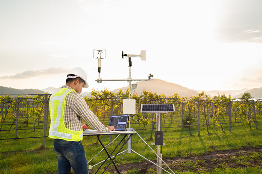 Engineer use tablet computer collect data with meteorological instrument to measure the wind speed, temperature and humidity and solar cell system on grape field, Smart agriculture technology concept