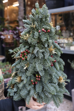 Winter decor mini christmas tree in florist's hands.