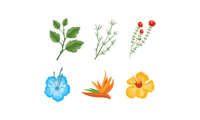Plants and flowers collection, design elements for invitation, greeting cards, spa, beauty care products vector Illustration