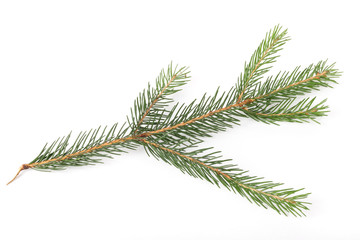 Fir tree branch ion a white background.Pine branch. Christmas fir.