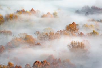 Jesień wschód słońca na forsta z mgłą, Włochy - 234241421