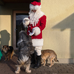 Santa is playing with a dog. Santa Claus feeds dogs.