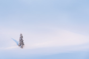 Winter background with snow and a lonely tree