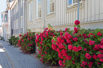 Hübsche Straße mit Rosen in Karlshamn Schweden