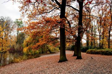 Tappeto di foglie nel bosco