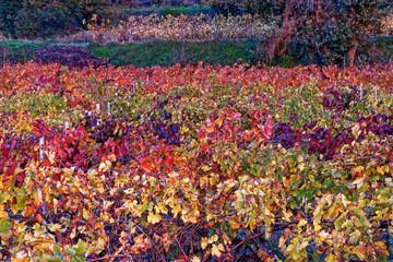 Papiers peints Aubergine paysage d'automne