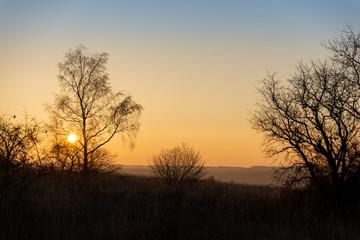 Silhouettes d'arbres sur un couché de soleil