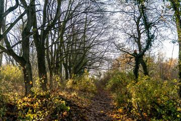Chemin bordé d'arbre en Automne