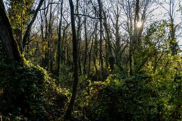 Lumière dans la forêt en automne
