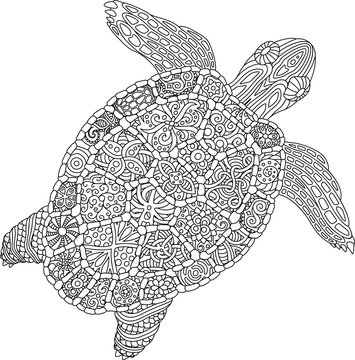 Coloring book page with turtle on white background