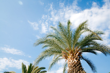 tropical palm trees against blue sky