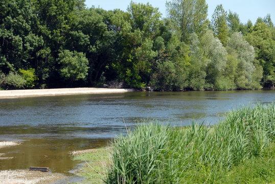 Saint-Aignan-sur-Cher, rivière Le Cher entourée d'arbres et de hautes herbes, Loir et Cher, France