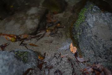 水、葉っぱ