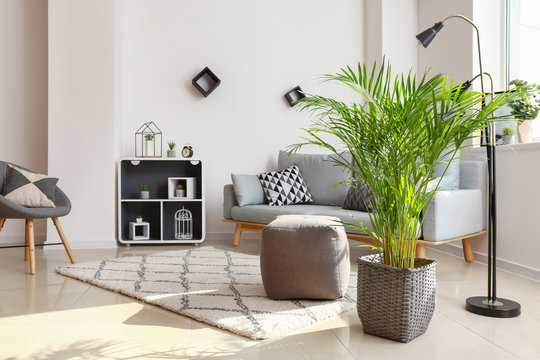 Decorative Areca palm in interior of room