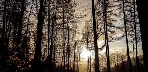 Landschaft Bäume Abenddämmerung