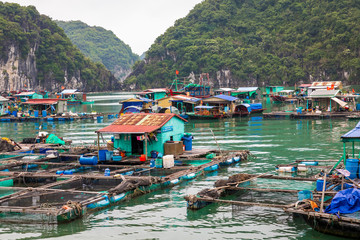 Floating fishing village and fishing boats in Cat Ba Island, Vietnam, Southeast Asia. UNESCO World Heritage Site.