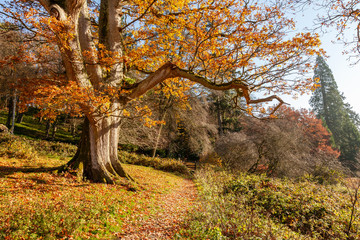 Autumnal scene of fallen leaves, colorful trees, Wiltshire Uk