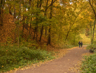 Лесная дорожка в осеннем лесу по которой уходят люди