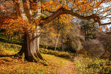 Autumnal scene of fallen leaves, colorful trees, Wiltshire, Uk