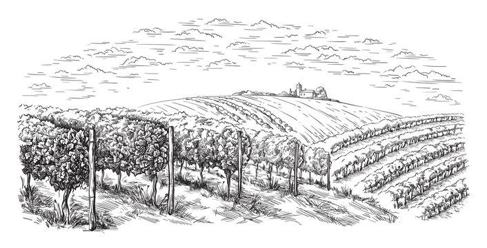 vine plantation hills, trees, clouds on the horizon vector illustration