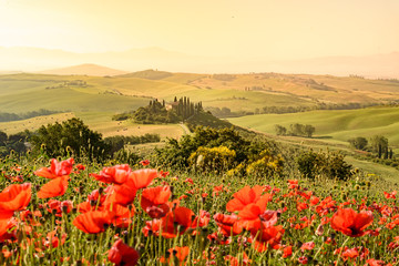 Foto op Canvas Toscane Poppy flower field in beautiful landscape scenery of Tuscany in Italy, Podere Belvedere in Val d Orcia Region - travel destination in Europe