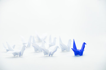 Close up blue bird flying different through a group of white bird,Leadership concept.