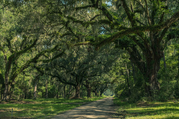 Neiuport Plantation Road, Georgia, USA - July 24, 2018: Long road lined with ancient live oak trees draped in spanish moss at historic plantation