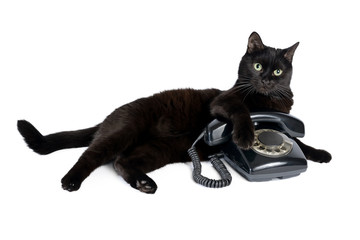 Black cat and retro black phone on a white