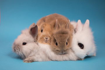 Little cute rabbits
