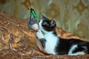 black and white kitten playing with a toy on the couch