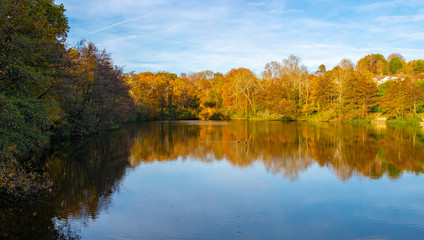 Lake and trees landscape during the autumn