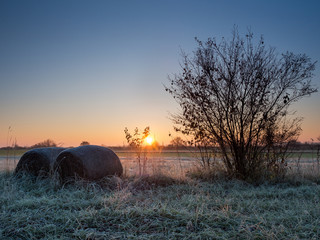 Frosty morning near lake neusiedlersee in Burgenland