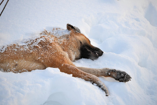 Dead dog in the snow close-up. Homeless animals