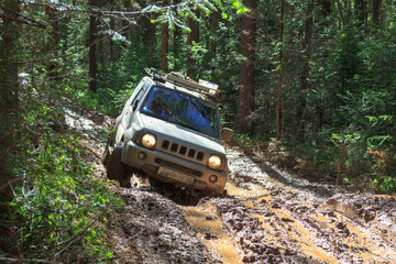 Сar stuck on a muddy forest track